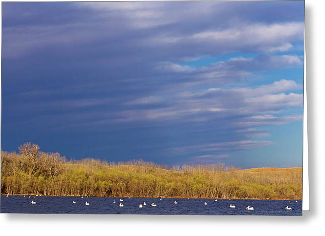 White Pelicans On Calamus Reservoir Greeting Card