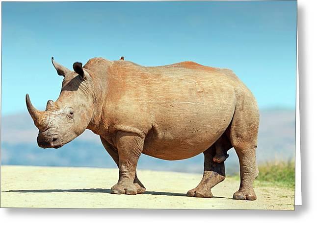 White Rhino Greeting Card by Bildagentur-online/mcphoto-schaef