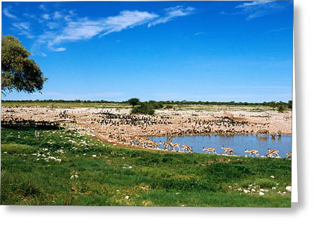 Wild Animals At A Waterhole, Okaukuejo Greeting Card by Panoramic Images