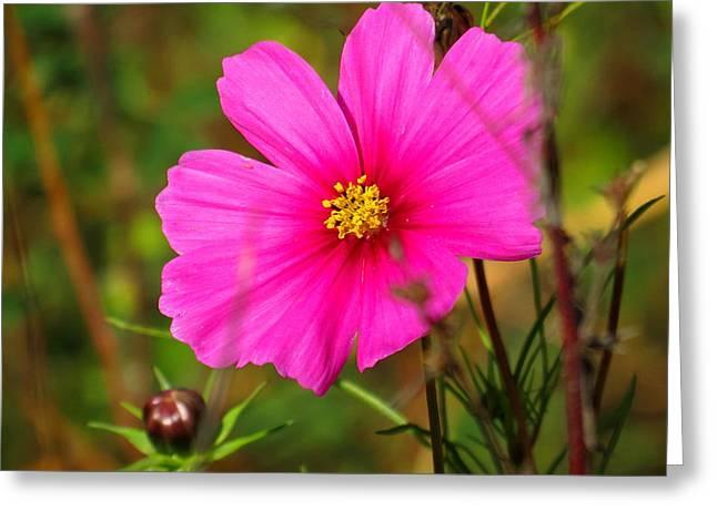 Wild Flower Greeting Card by Eric Switzer