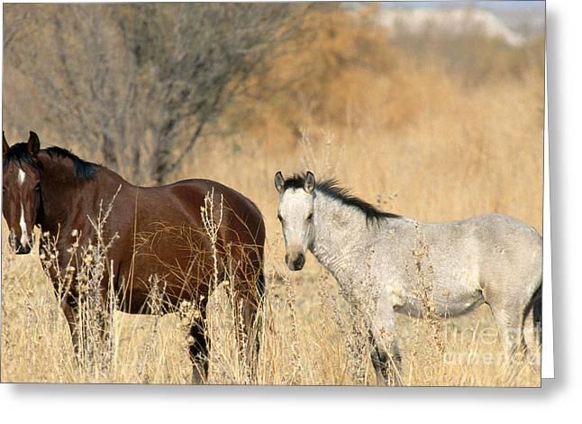 Wild Horses Amargosa Desert Nevada Greeting Card by Mark Newman