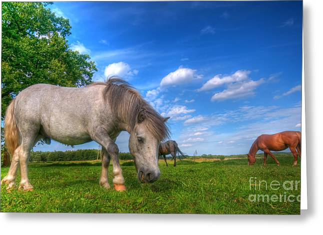 Wild Horses On The Field Greeting Card