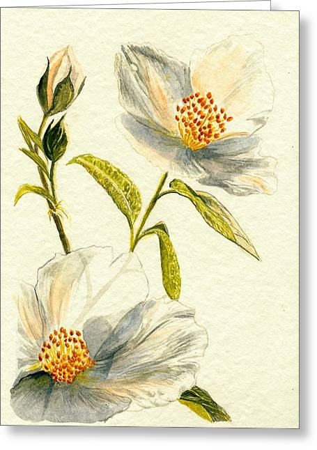 Wild Roses Greeting Card by Donna Turbyfill