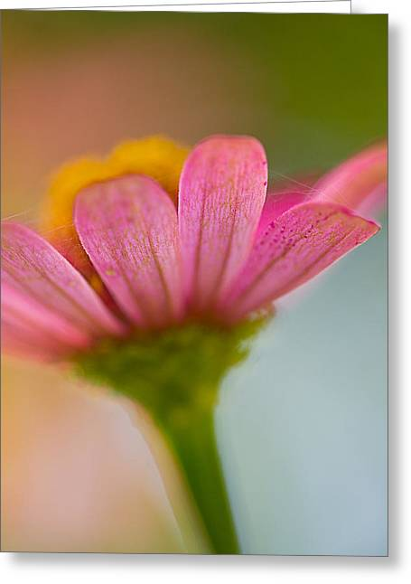 Greeting Card featuring the photograph Wildflower - Bali by Matthew Onheiber