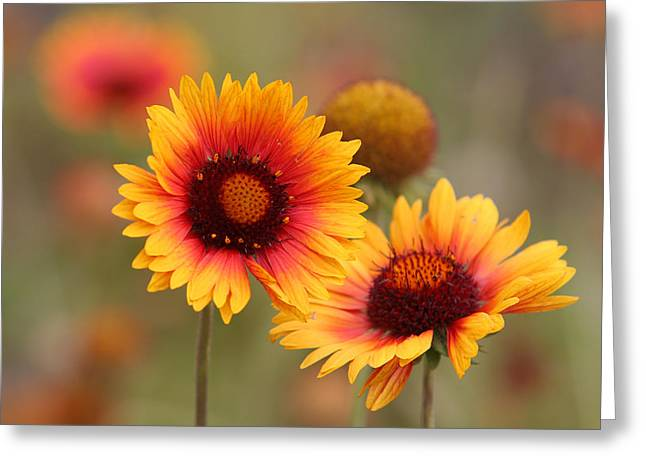 Wildflowers Greeting Card by Darryl Wilkinson