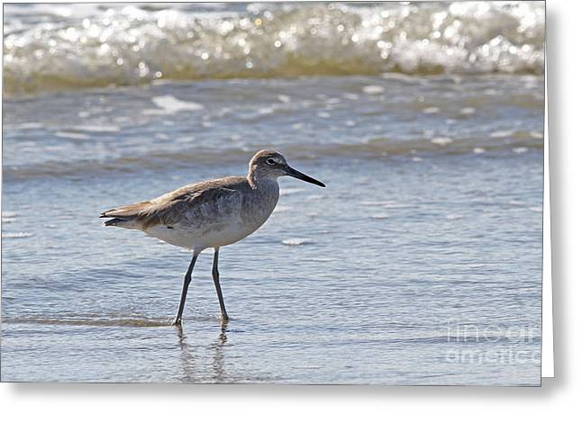 Willet Bird Wading In Ocean Surf Greeting Card