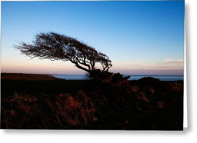 Wind Sculptured Hawthorn Tree, The Greeting Card