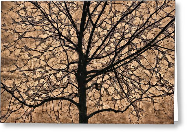 Windowpane Tree In Autumn Greeting Card by Carol Leigh