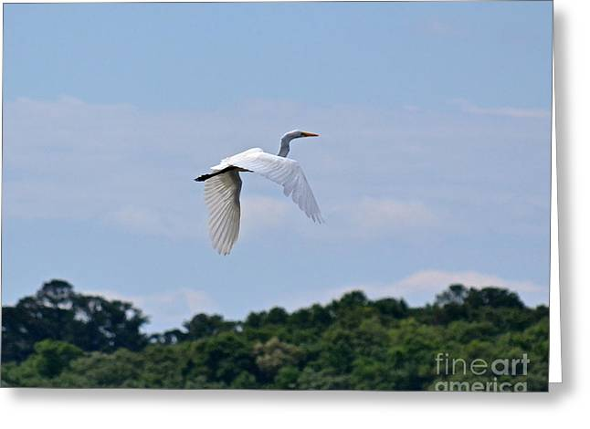 Greeting Card featuring the photograph Wings II by Carol  Bradley