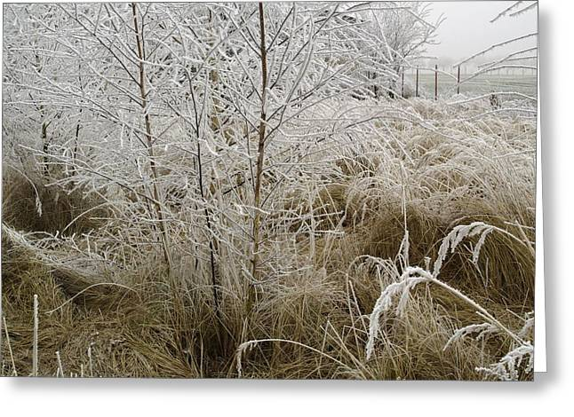 Winter Grass Greeting Card by Magdalena Mirowicz
