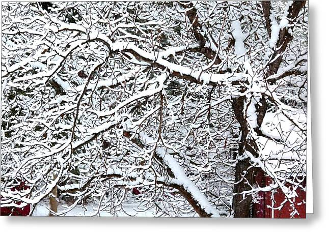 Winter Haven Greeting Card by Will Borden