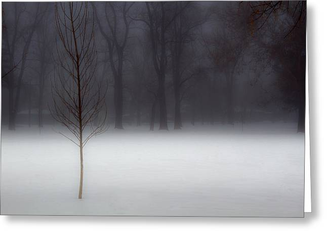 Winter In The Park Greeting Card by Utah Images