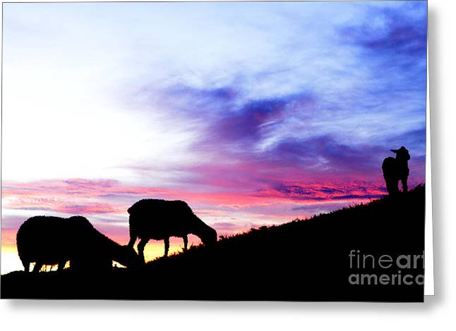 Winter Lambs And Ewes Sunrise Greeting Card