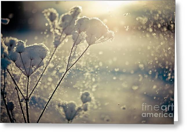 Greeting Card featuring the photograph  Snow Covered Branch And Snow Fall Artmif by Raimond Klavins