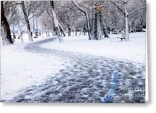 Winter Park In Toronto Greeting Card