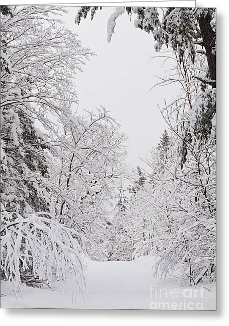 Winter Road Greeting Card by Cheryl Baxter