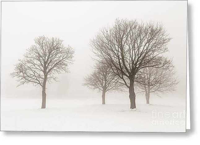 Winter Trees In Fog Greeting Card by Elena Elisseeva