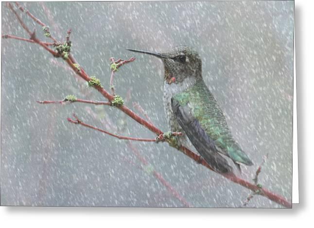 Wintering Hummingbird Greeting Card