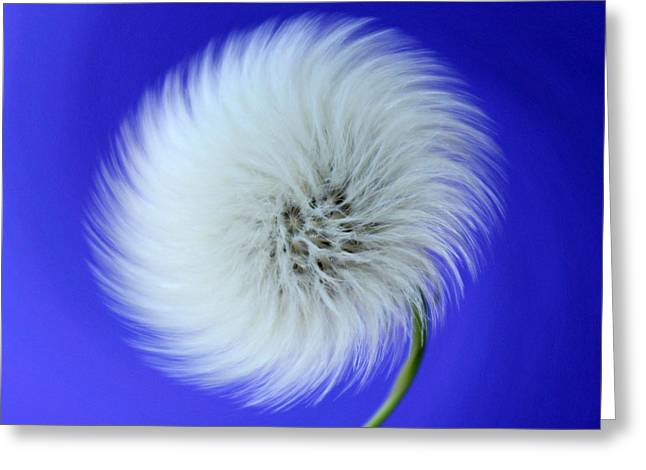 Wish In Blue Greeting Card by Krissy Katsimbras