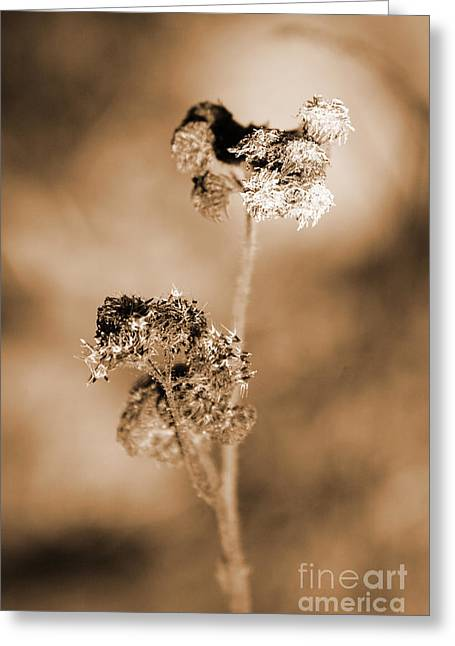 Withering Weed Greeting Card by Jorgo Photography - Wall Art Gallery