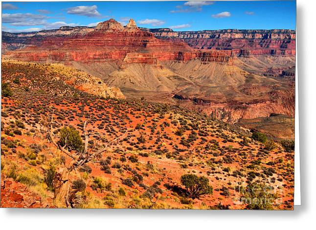 Within The Canyon Greeting Card by Tara Turner