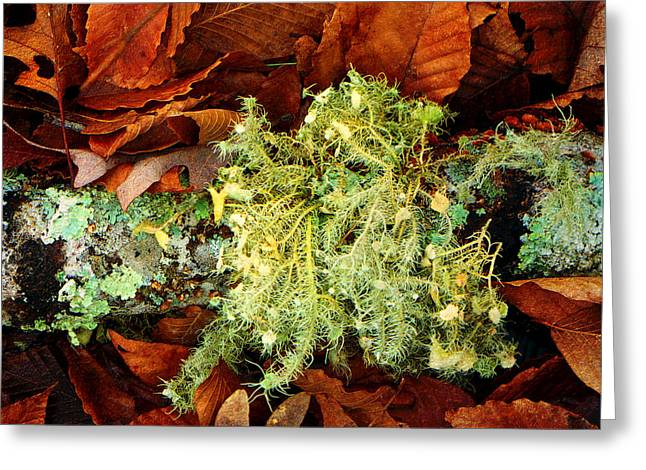 Wolf Moss Lichen Greeting Card by Frank Winters