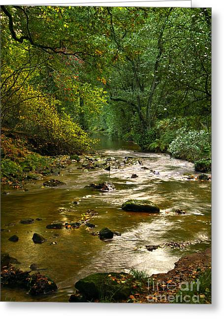 Woodland Stream In Autumn Greeting Card