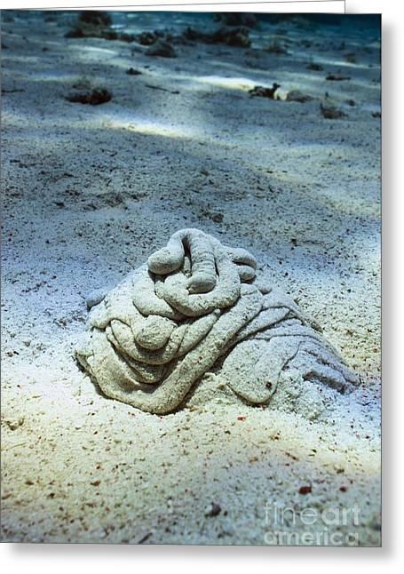 Worm Sand Cast Greeting Card