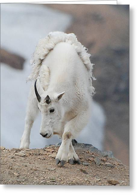Wyoming Native Greeting Card by Beth Sullivan