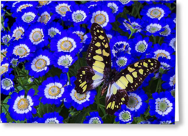 Yellow And Black Butterfly Greeting Card by Garry Gay