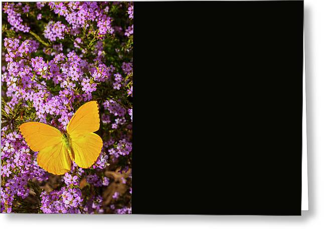 Yellow Butterfly On Pink Flowers Greeting Card by Garry Gay