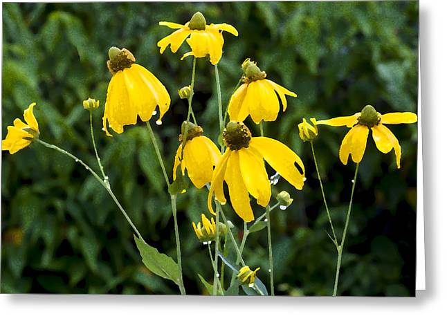 Yellow Cone Flowers Rudbeckia Greeting Card