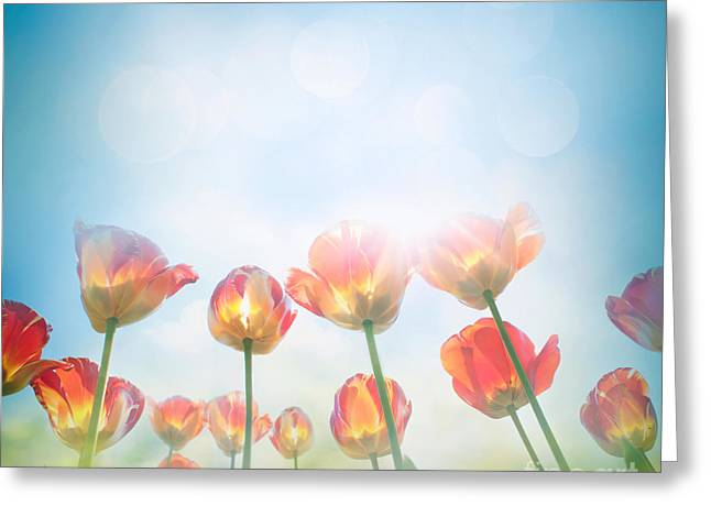 Yellow Tulips Greeting Card by Mythja  Photography