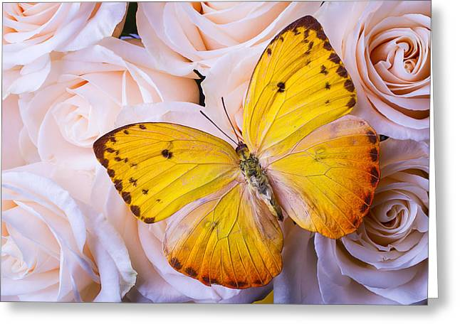 Yellow Wings Greeting Card by Garry Gay