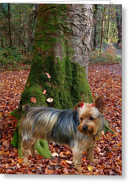 Yorkie Pose Greeting Card