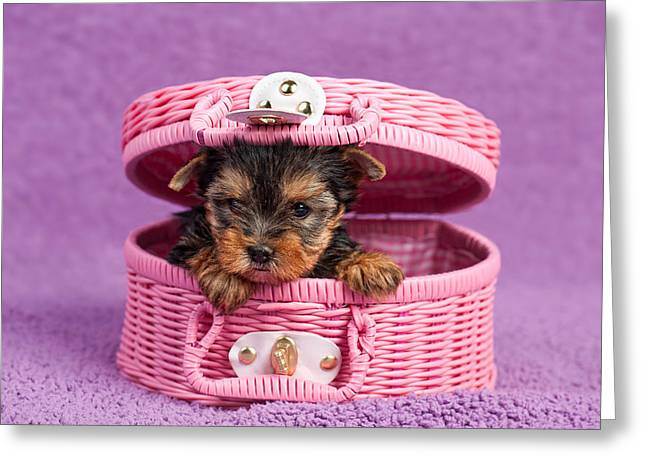 Yorkshire Terrier Puppy Greeting Card by Marta Holka