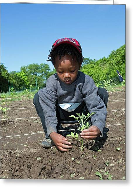 Young Boy Planting Tomatoes Greeting Card by Jim West