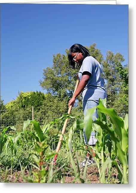 Young Woman Gardening Greeting Card
