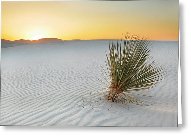 Yucca Plant At White Sands Greeting Card