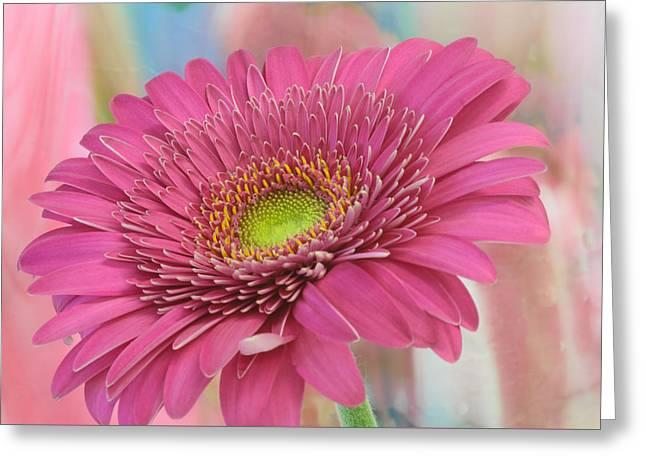 Gerbera Daisy Macro Greeting Card