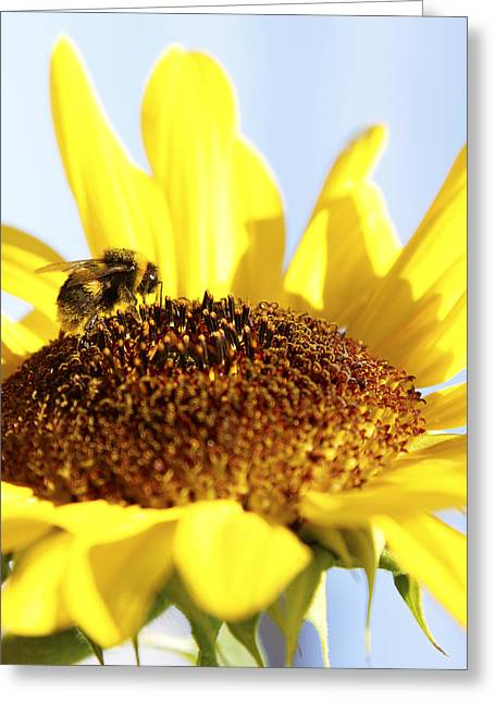 Bee On Flower Greeting Card by Les Cunliffe