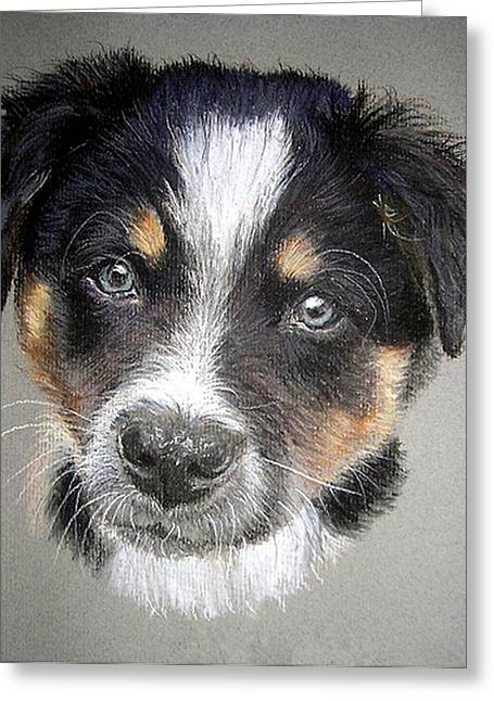 Border Collie Dog Portrait Greeting Card by Olde Time  Mercantile