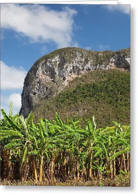 Cuba, Pinar Del Rio Province, Vinales Greeting Card by Walter Bibikow