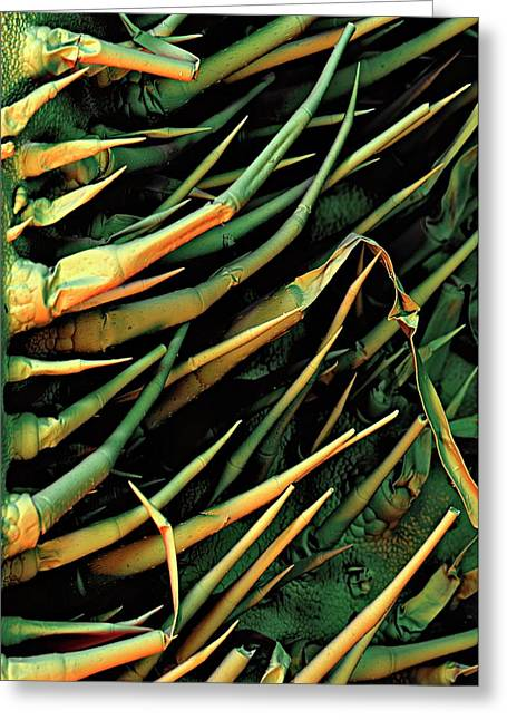 Cucumber Leaf Trichomes Greeting Card by Stefan Diller
