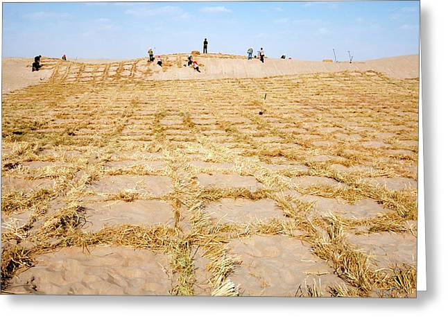 Desertification Prevention Greeting Card by Thierry Berrod, Mona Lisa Production