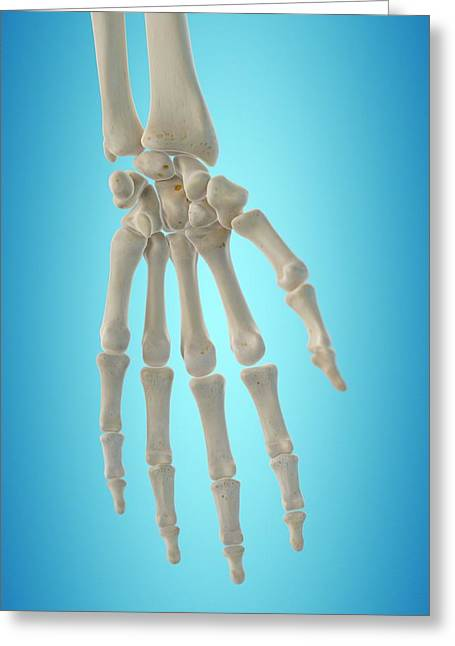 Human Hand Bones Greeting Card by Sciepro