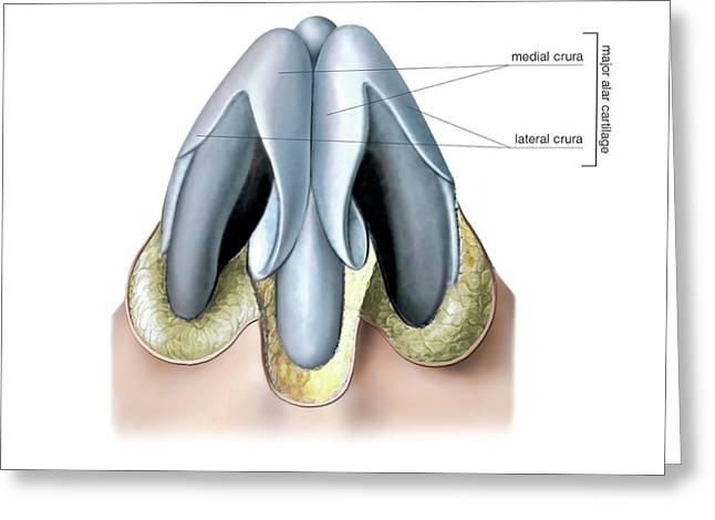 Nasal Cavity Greeting Card by Asklepios Medical Atlas