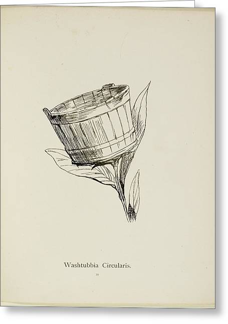 Nonsense Botany By Edward Lear Greeting Card