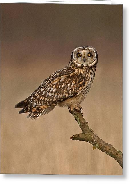Short Eared Owl Greeting Card by Paul Scoullar