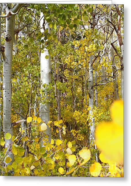 Sierra Autumn Greeting Card by ELITE IMAGE photography By Chad McDermott